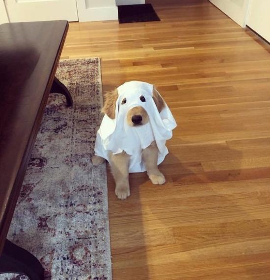 Sen büyüdün de Casper mı oldun bakim