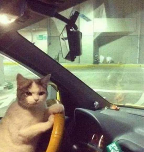 Yandaki arabaya sinirlenen baba bakışı