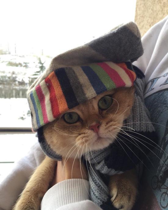 Kediler böyle giyinsin