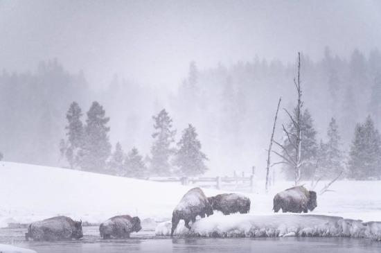 Yellowstone Ulusal Park, Wyoming