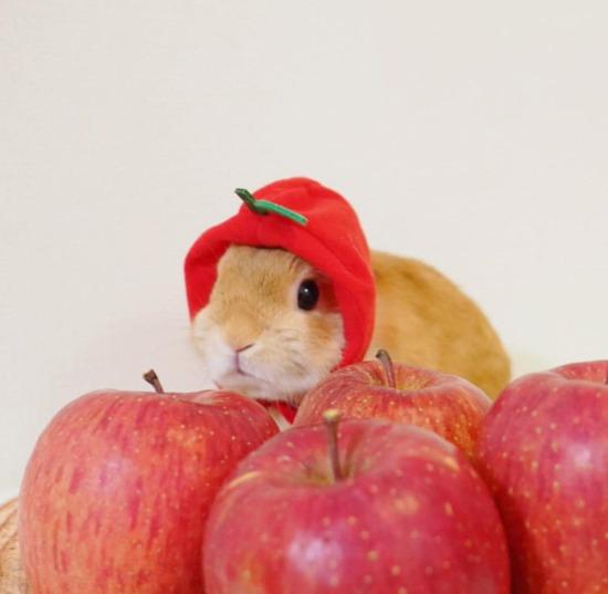 Ben de elmayım işte bakın