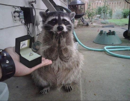 Evlilik teklifi almış kız suratı