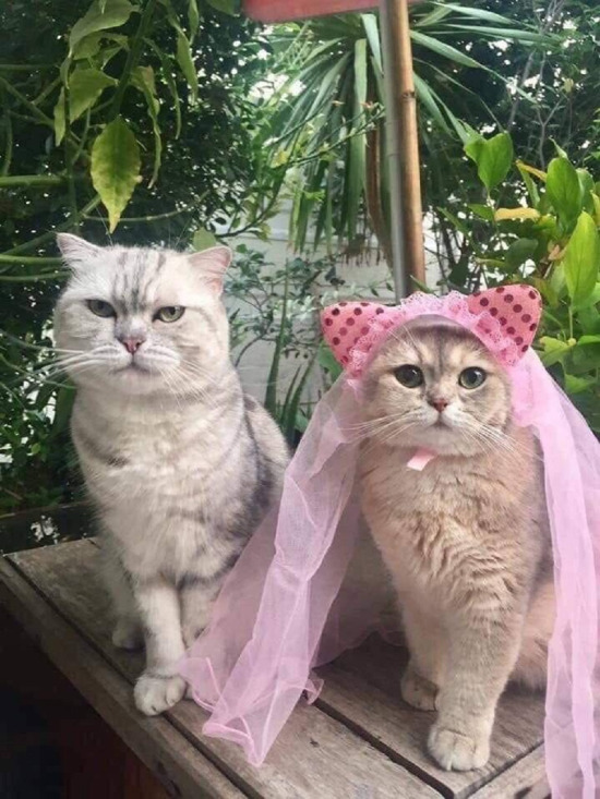 Çekme kediyik beğenmezler bizi