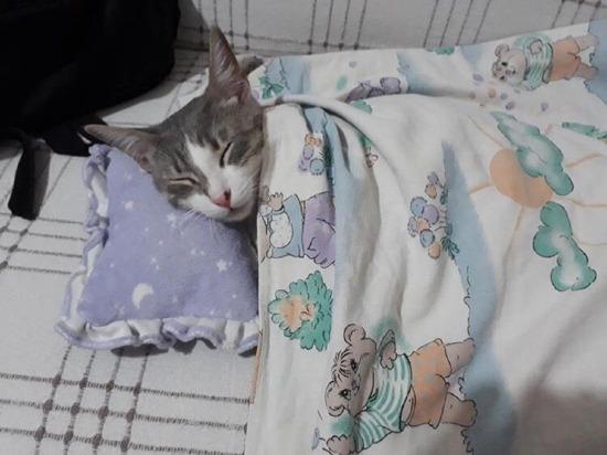 Uyuyalım bakalım yarın iş var