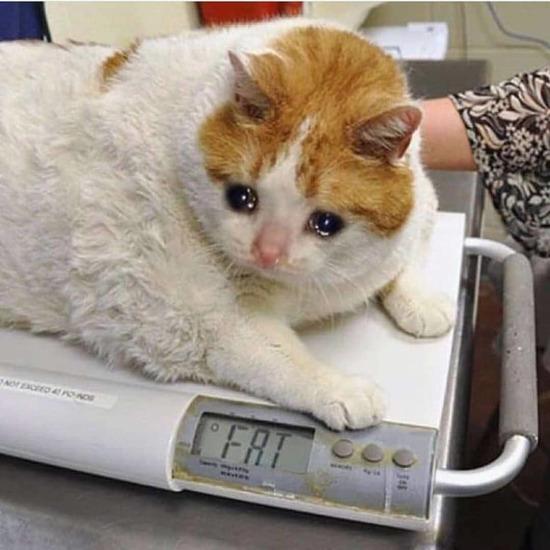 Basit kilolar aldık
