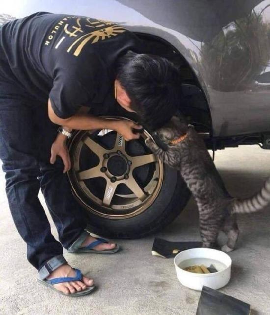 Okumayan kediler itinayla sanayiye verilir