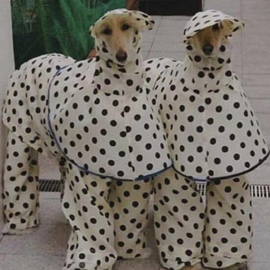Hayal ettiğimiz pijamalı hayatı yaşıyorlar