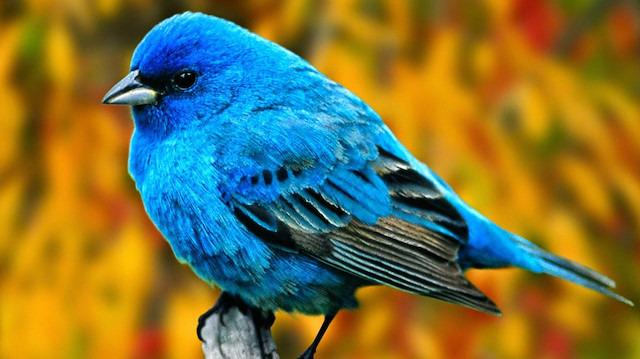 Biraz bilgi: Kuşlar hakkında daha önce duymadığınız gerçekler floodu