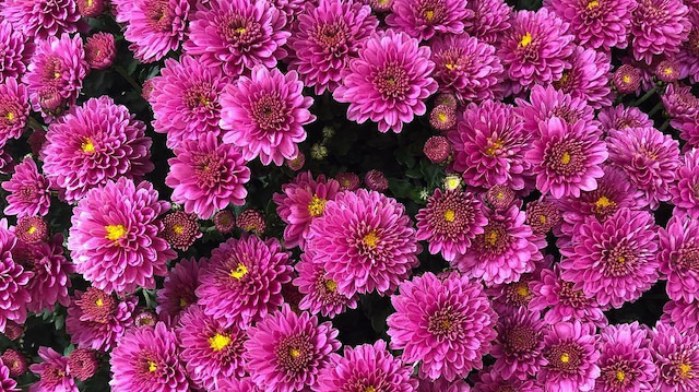 Evinize bahar getirecek 7 bitki