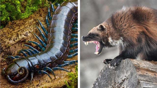 Tüyler ürperten görüntüleriyle dünyanın en korkunç 10 hayvanı!
