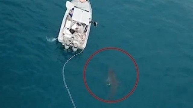 Avustralya'da küçük kız köpek balığının hedefi oldu