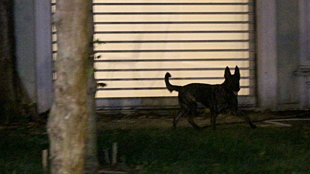 Başkonsolosluk bahçesine 'kadavra' köpeği getirildi