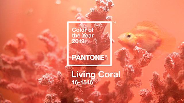 Pantone, 2019'un rengini açıkladı: Canlı mercan