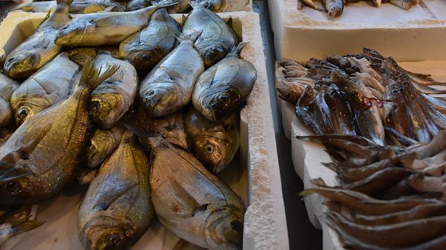 Türkiye balık ihracatında yükselişte: ABD'ye levrek, Rusya'ya çipura