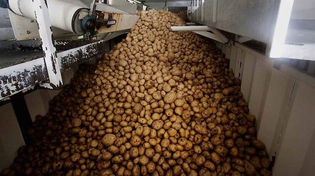 Türkiye patates ithalatı için vergiyi sıfırladı