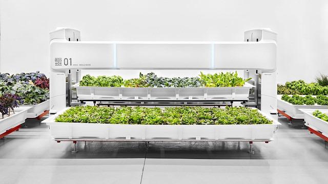 Robotların çalıştığı çiftlik başardı: 'Sebzeler market raflarında'