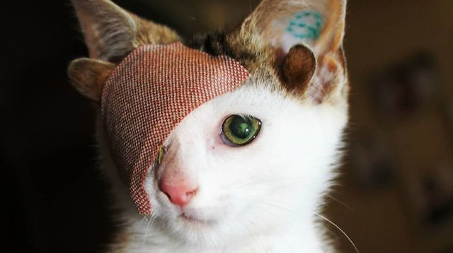 4 kulaklı ve tek gözlü kedi kurtarılarak yeniden hayata tutundu
