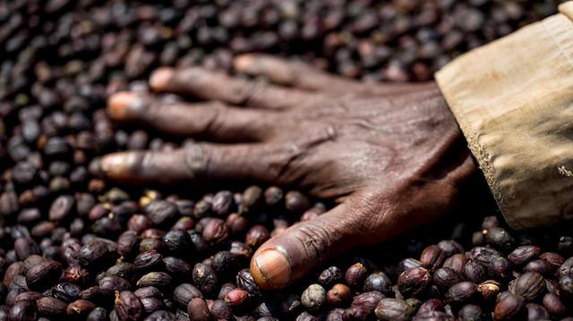 200 milyar dolarlık kahve pazarının zarar edeni 'çiftçiler' oldu