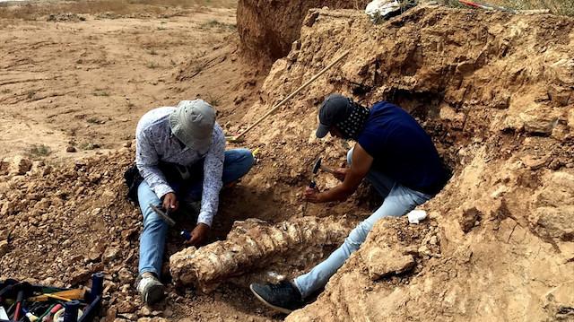 Kırşehir kıyılarındaki Kurutlu'da 2 bine yakın hayvan fosili bulundu