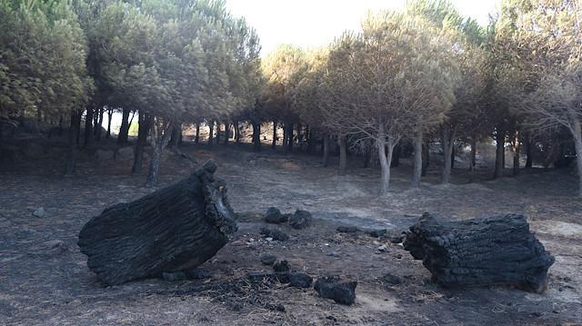 80 hektar ormanlık alan küle döndü