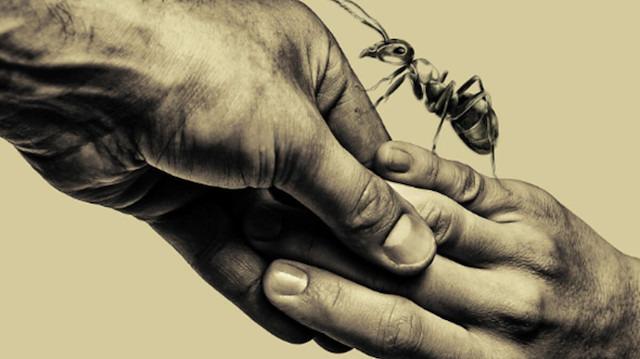Karınca filminin prömiyeri Boğaziçi Film Festivali'nde gerçekleştirilecek