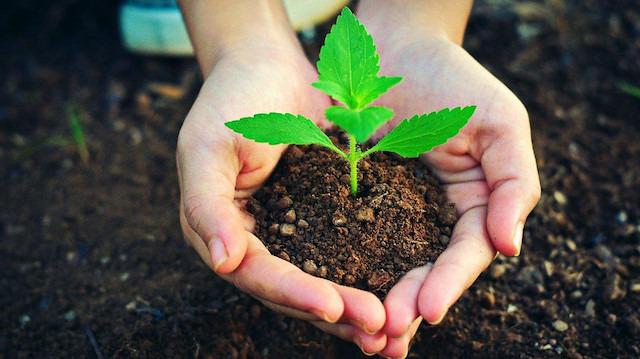 11 Kasım 'Milli Ağaçlandırma Günü' ilan edildi