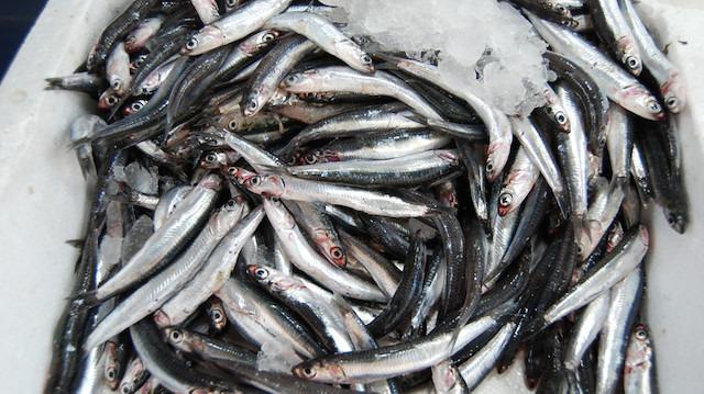 Hamsinin fiyatı 5 liraya düştü: Amaç vatandaşları balığa yönlendirmek