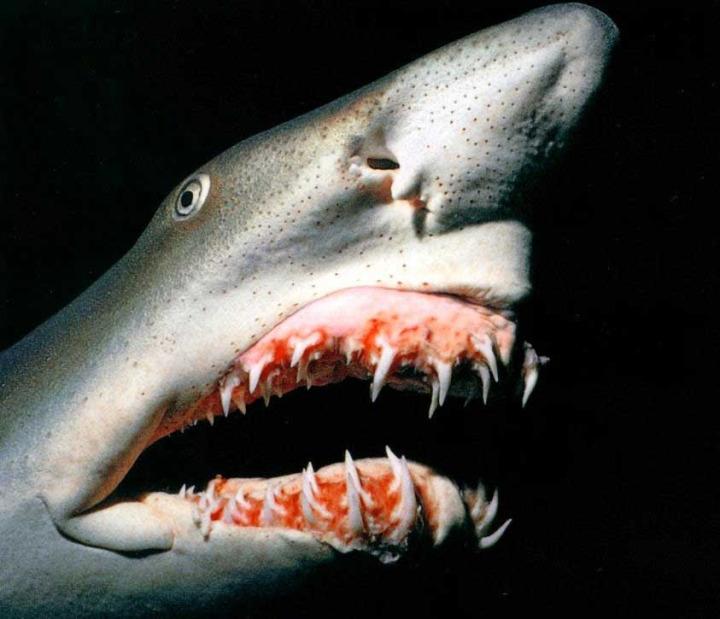 Tüyler ürperten Görüntüleriyle Dünyanın En Korkunç 10 Hayvanı