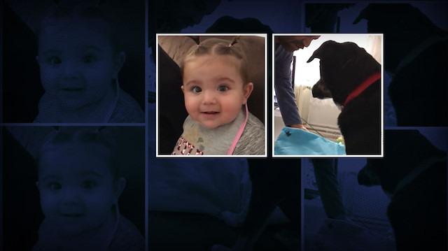 Kızını azarlayan babaya köpeğin sert tepkisi
