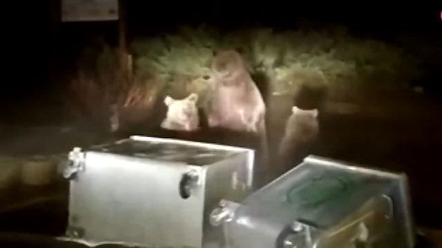 Yabani ayılar kendisini görüntüleyen vatandaşa saldırdı