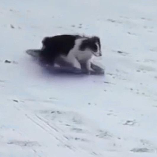 Köpeğin kızak keyfi görenleri şaşırtıyor