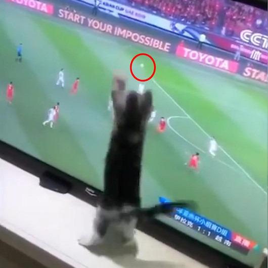 Maç izlerken topa kilitlenen kedi izleyenleri kahkahaya boğdu