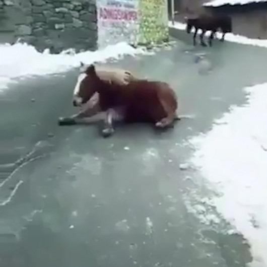 Buzlu yolda ilerlemeye çalışan atların zorlu mücadelesi