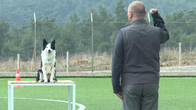 Köpekler 'uluslararası arama kurtarma sertifikası' için yarıştı