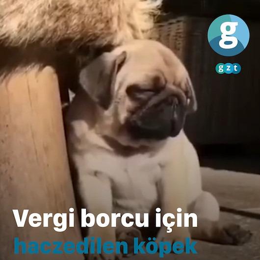 Vergi borcu nedeniyle köpeği haczettiler