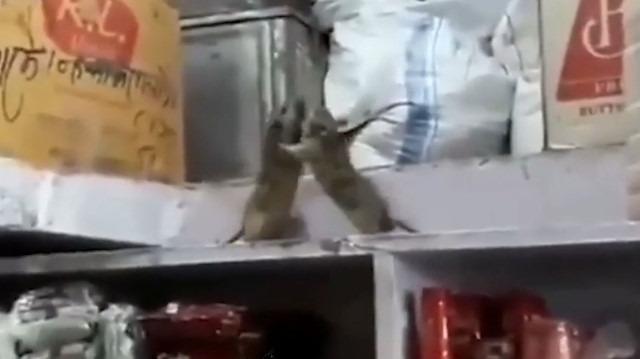 Karadeniz dublajıyla farelerin 'fındık kavgası'