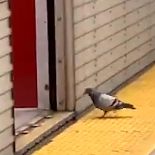 Uçmaktan sıkılan güvencin yolculuğa metro ile devam ediyor