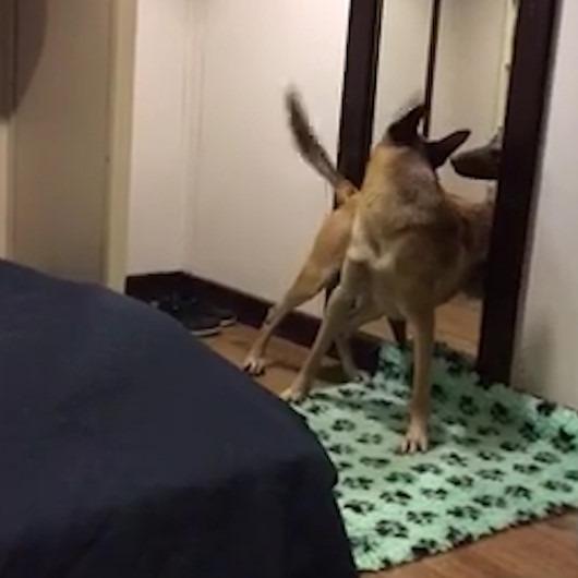 Aynada kendisini gören köpeğin gülümseten davranışları