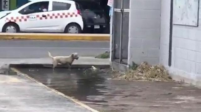 Su birikintisinde çocuk gibi eğlenen sokak köpeği