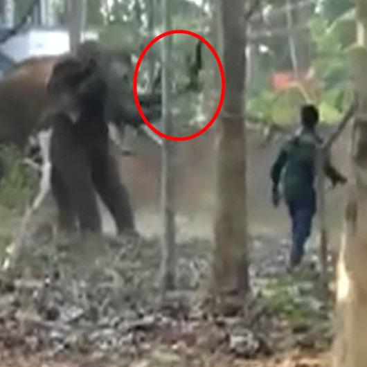 Öfkelenen fil hortumuyla bakıcısını yerde yere çarptı