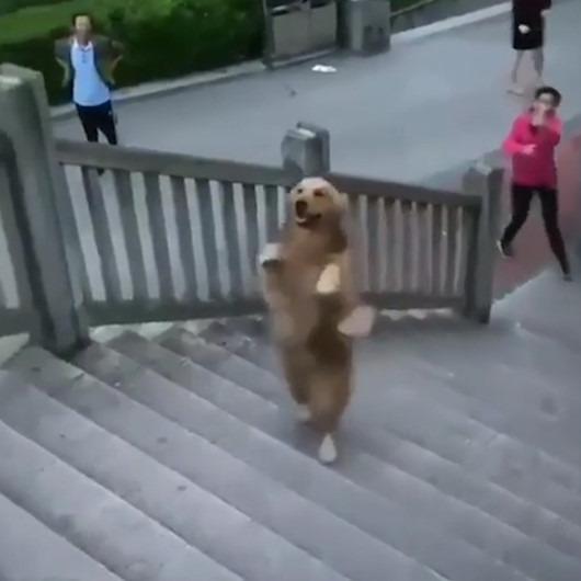 Uzun süredir birbirlerinden ayrı kalan köpek ve sahibinin kavuşma anı