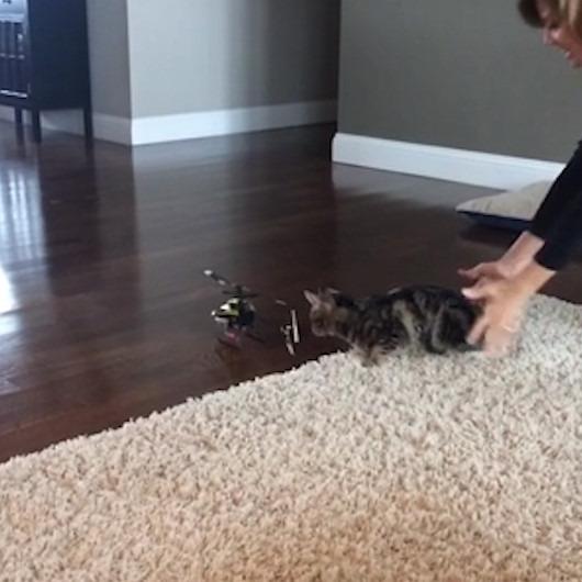 Kedisine sessizce yaklaşıp hayatının şokunu yaşatan kadın