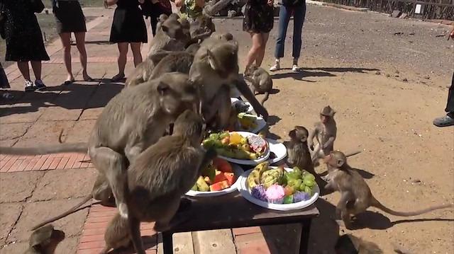 Doğum günü partisine katılan maymunlar çılgına döndü