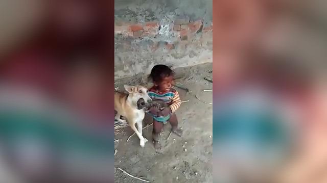 Yavrusunu kaçıran ufaklığa anne köpeğin tepkisi