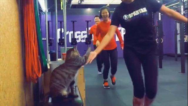 Spor salonunun motivasyon kaynağı sevimli kedicik