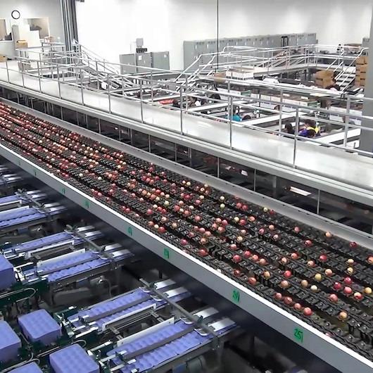Elmaların hipnotize eden fabrika yolculuğuna siz de katılmak ister misiniz?