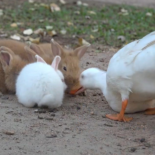 'Yemeyenin malını yerler' dedi, tavşanların hem yiyeceğini hem de aklını aldı