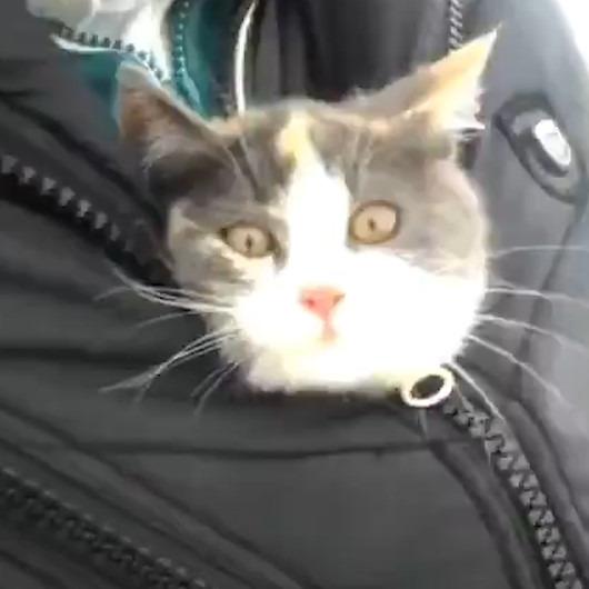 Ağaçtan kurtarılan yavru kediye anne şefkati