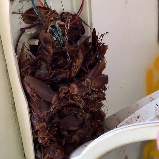 Telefon kutusuna gizlenen hamamböceklerini görünce şoke oldu