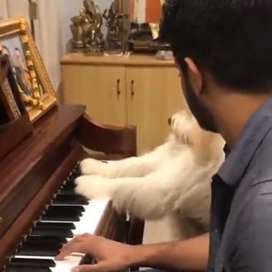 Sahibinden piyano dersi alan köpeğin sevimli halleri
